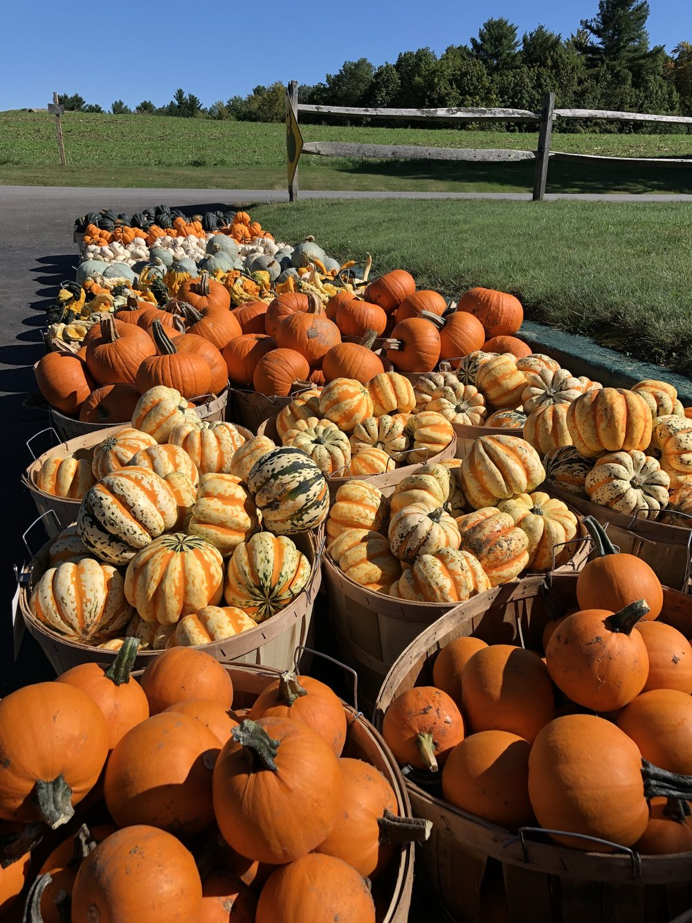 New Hampshire Fall Harvest Pumpkins