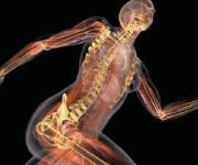 ANATOMIA Y FISIOLOGIA APLICADA AL MASAJE. Sistemas del Cuerpo Humano, Beneficios y Contraindicaciones Generales, Toma e Interpretación de Hoja Clínica.