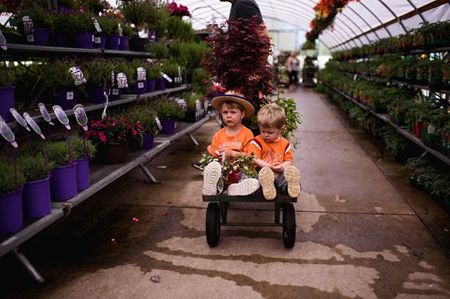 They had more fun that they'd like to admit.  We found some new flowers this weekend.  What are your summer plans?  . . . . . . #simplychildren #childhoodunplugged #letthekids #momlife #dadlife #family #kids #kenosha  #brothers #clickinmoms #childhood #magicofchildhood #bigbrother #littlebrother #momtog #buchtaboys #arthurlance #cheeksfordays #sweet #kenoshaphotographer #lifestylephotographer #wisconsinphotographer #momlife #dadlife #toddler #toddlerlife #momswithcameras #thumbsucker #littlemoments