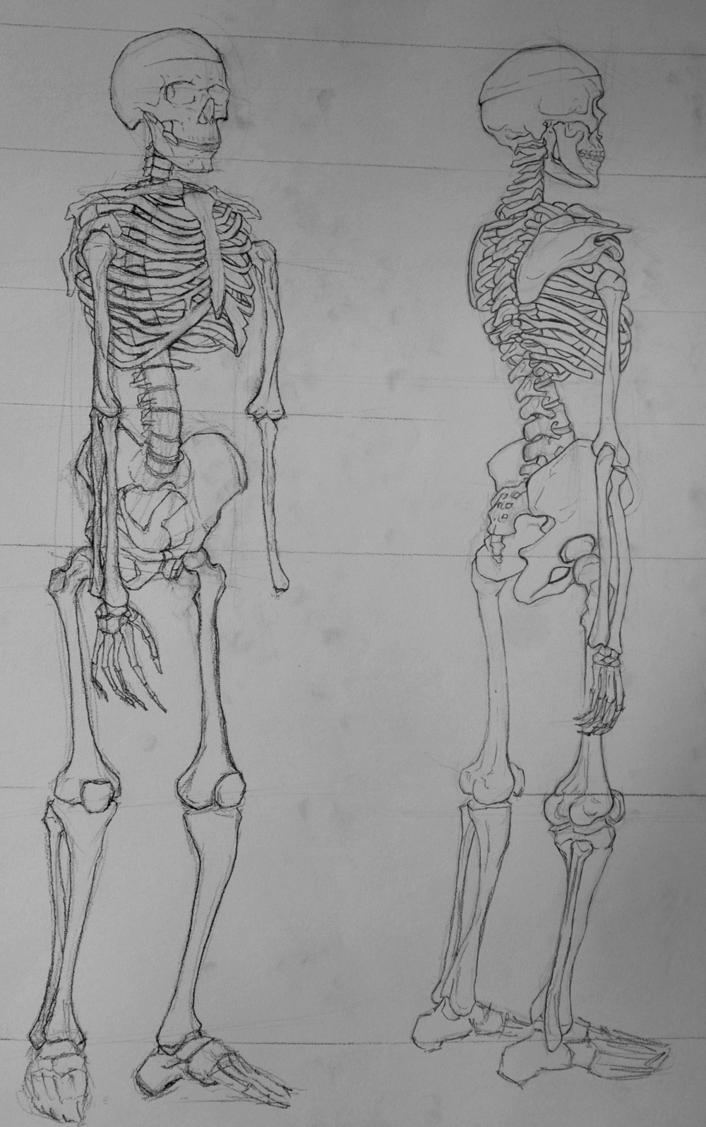 SkeletonStudies1.jpg