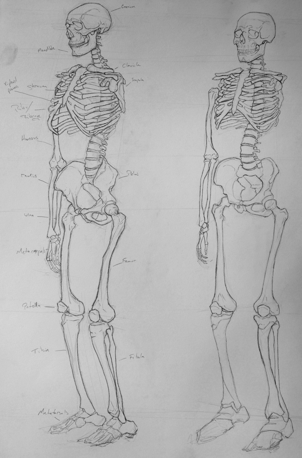 SkeletonStudies2.jpg