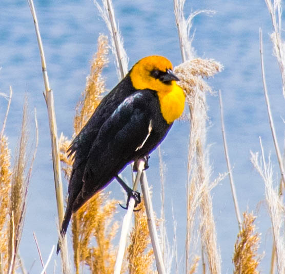 Birds on Great Salt Lake sightseeing bus tours