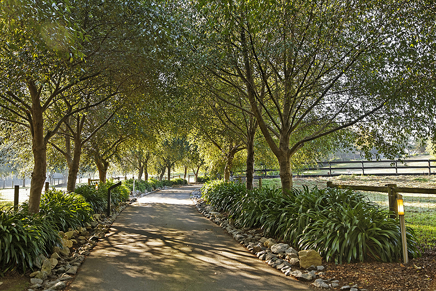 Emerald Ridge driveway