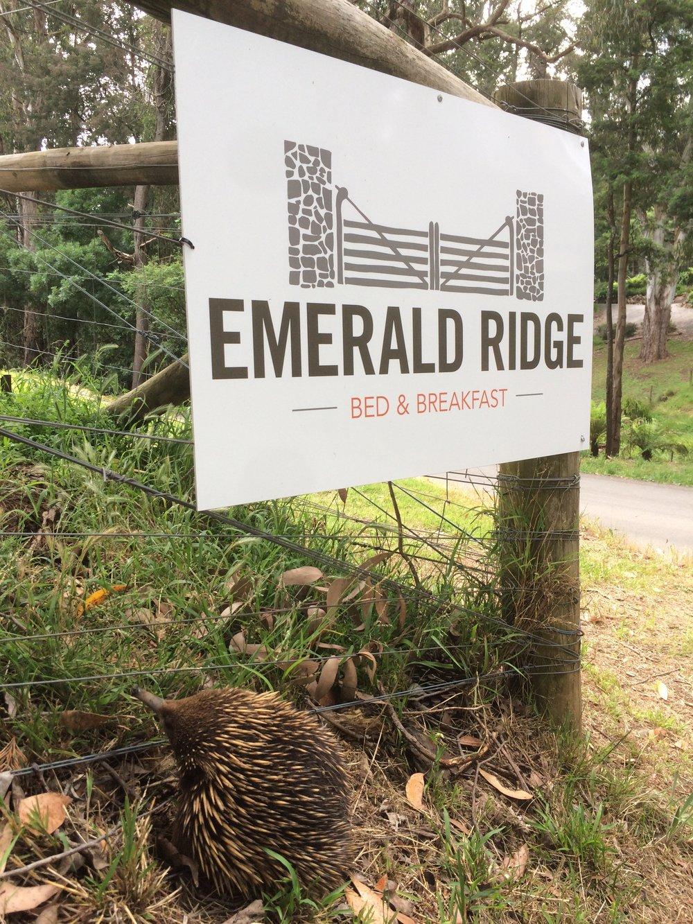 Emerald Ridge Echidna