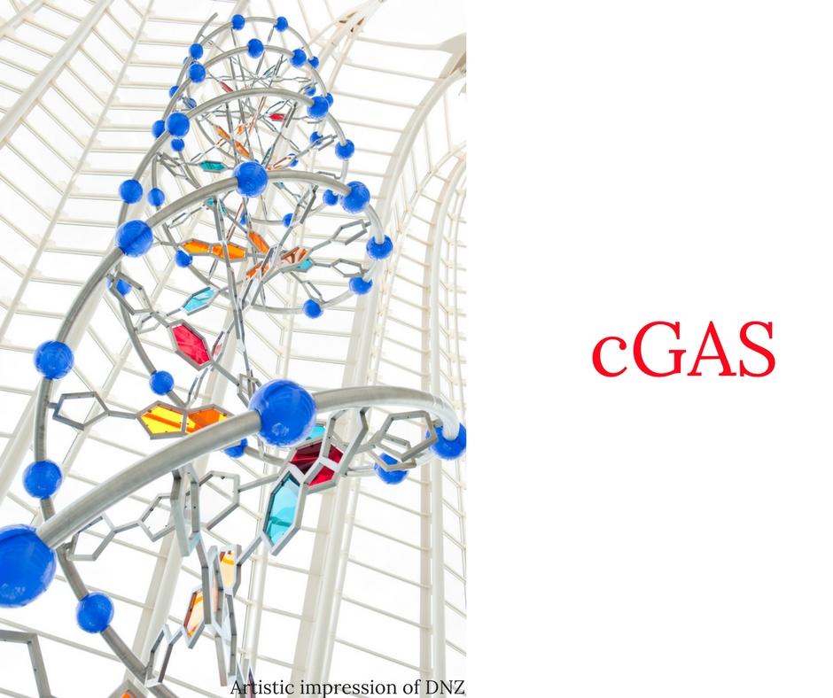 cGAS (2).jpg
