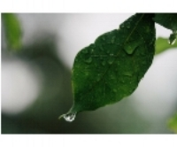 water on a leaf.jpg