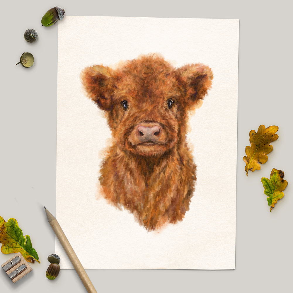 Bluebell Highland Cow Calf - Unframed Print Mockup 2.jpg