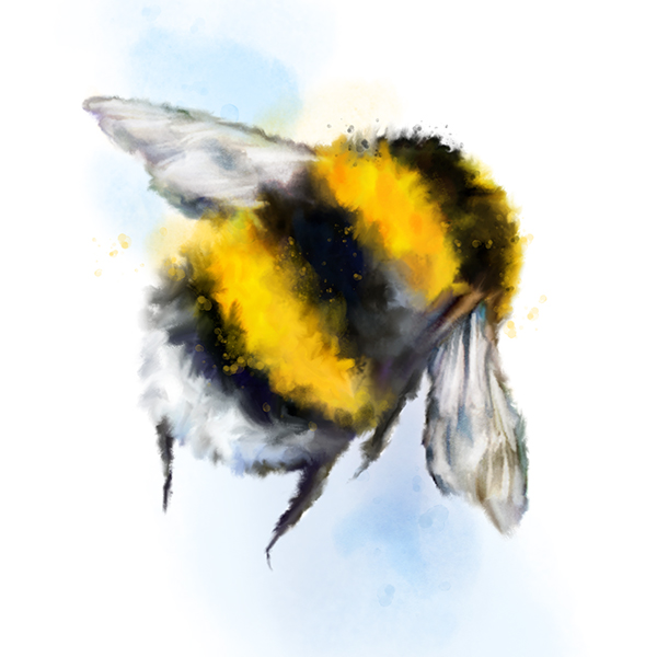 'Bumble' from £12