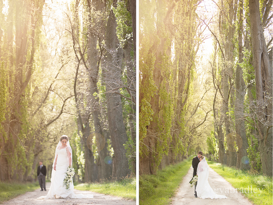 Sileni Estate Winery - Wedding photography by Michelle Fey