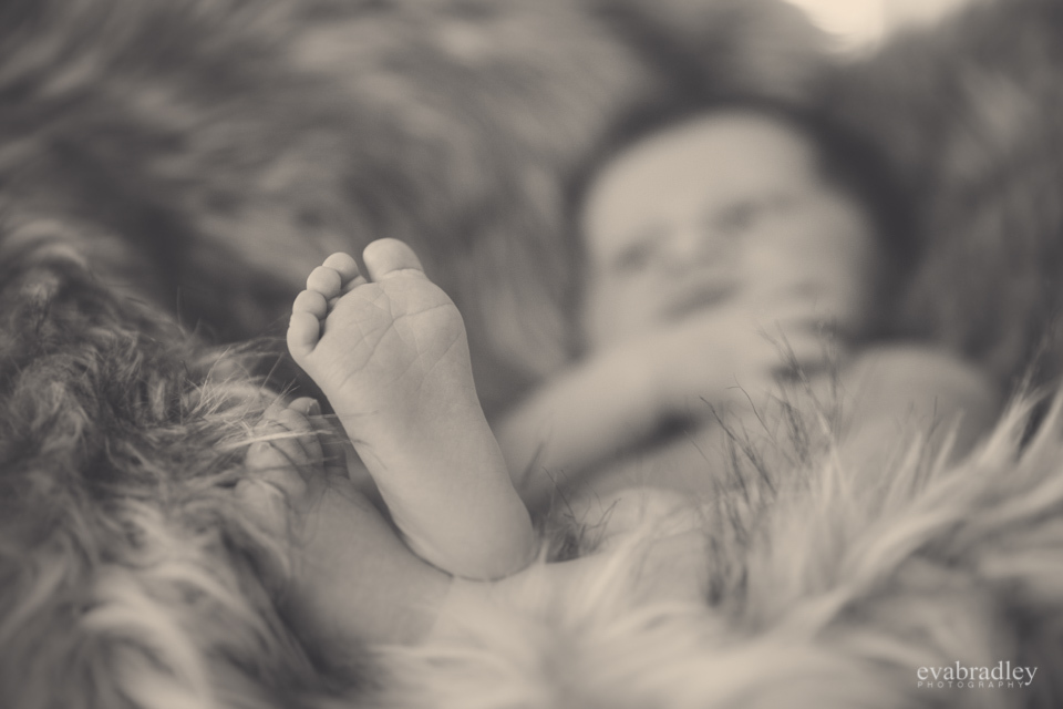napier newborn photographers