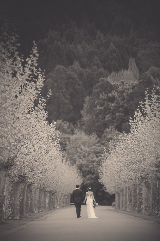 vineyard-weddings-nz