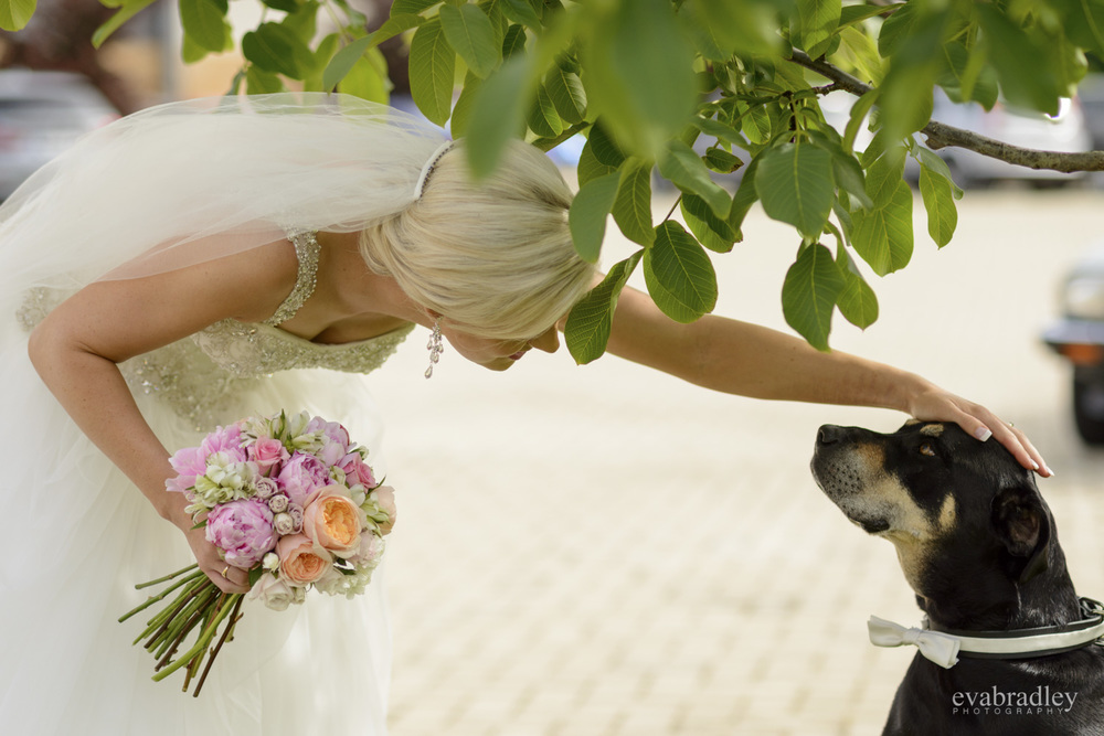 bride and dog eva bradley