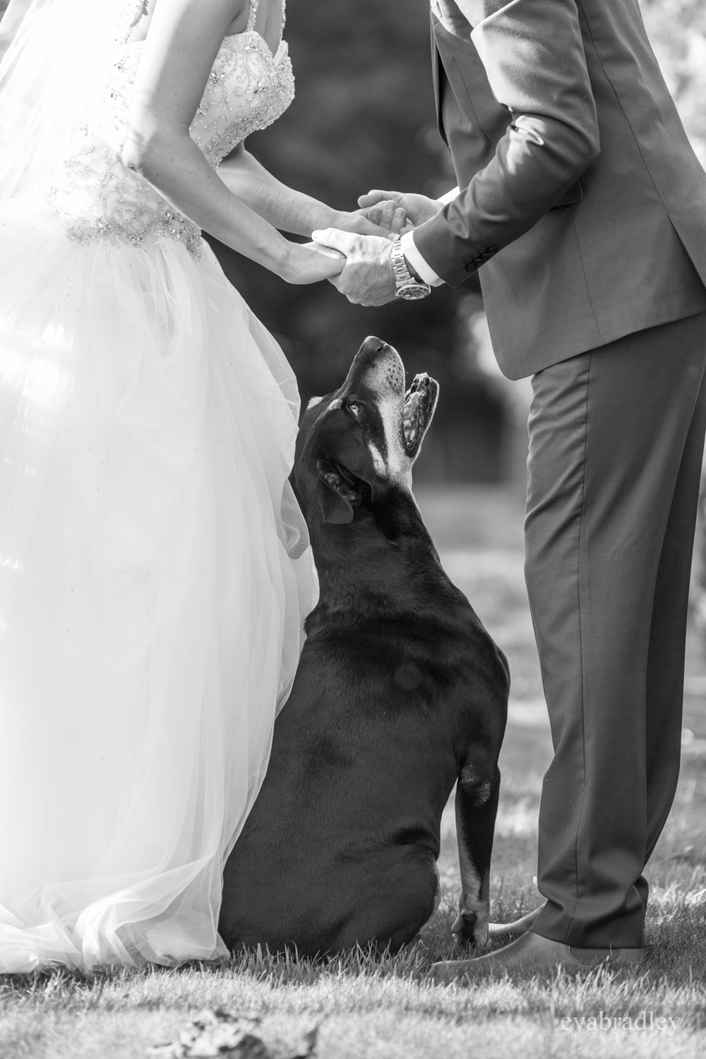 cute dogs at weddings nz hawkes bay