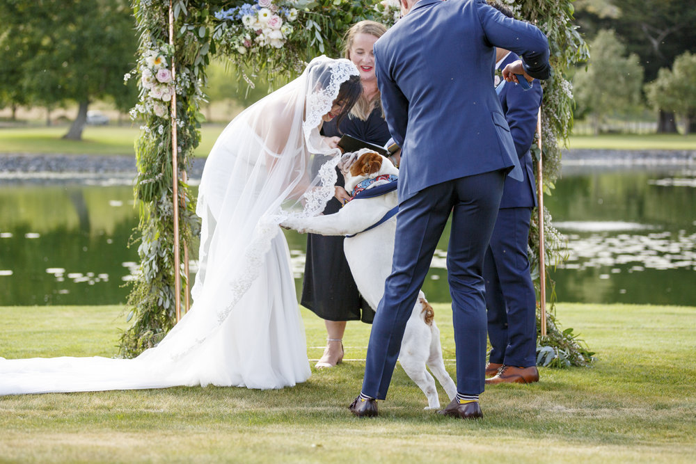dogs-at-hawkes-bay-weddings