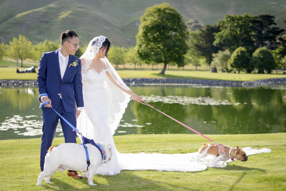 hawkes-bay-weddings-dogs
