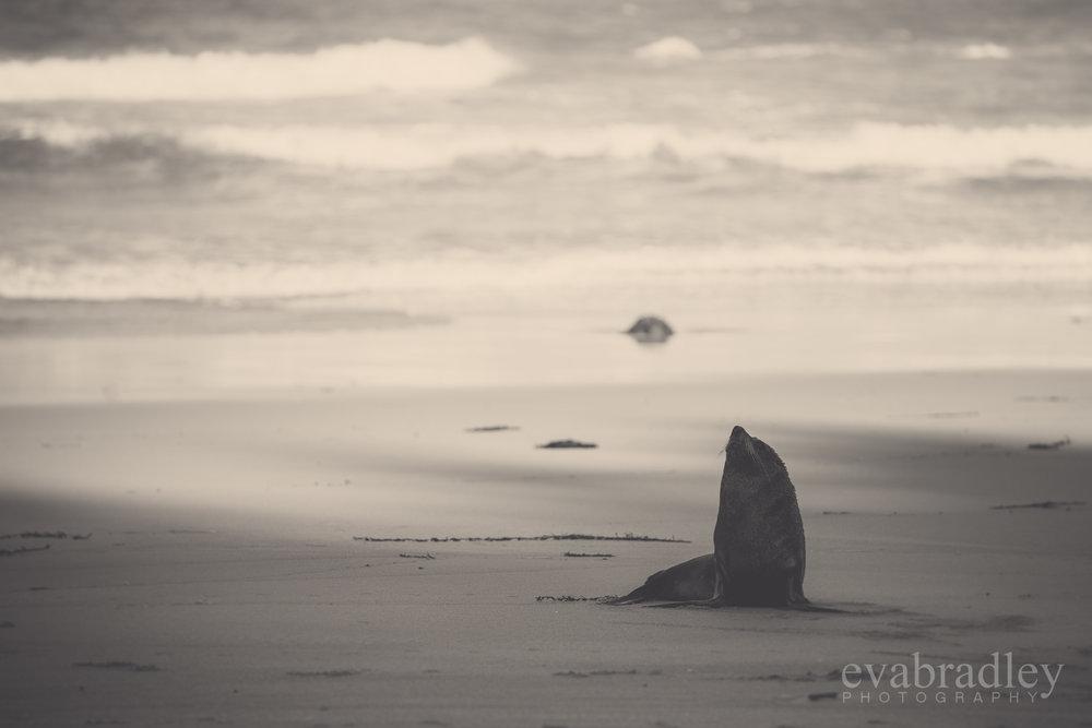 hawkes bay photographers