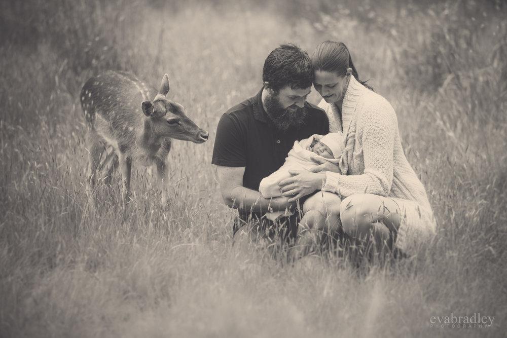best hawke's bay newborn photographer