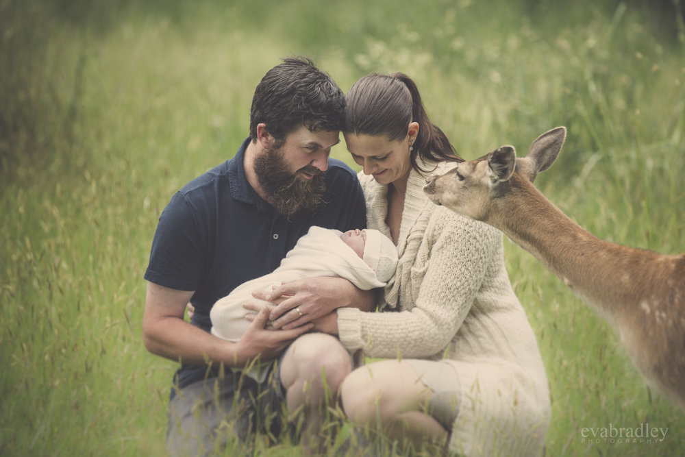 best napier newborn photographer