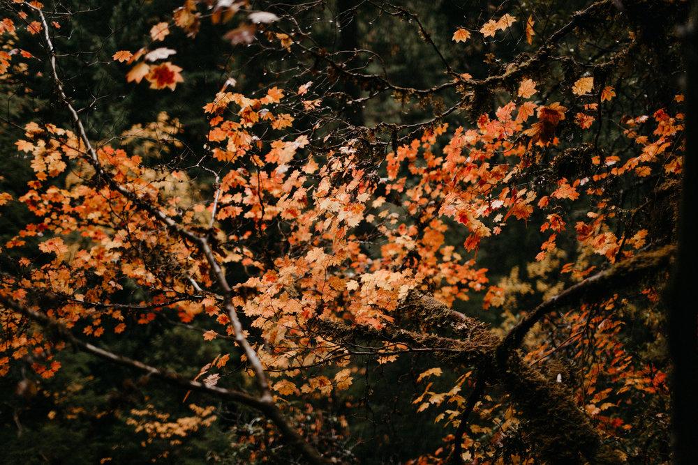 Toketee Falls Engagements by Kandice Breinholt-3.jpg