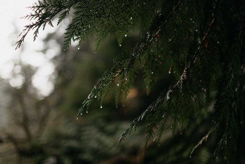 Toketee Falls Engagements by Kandice Breinholt-9.jpg