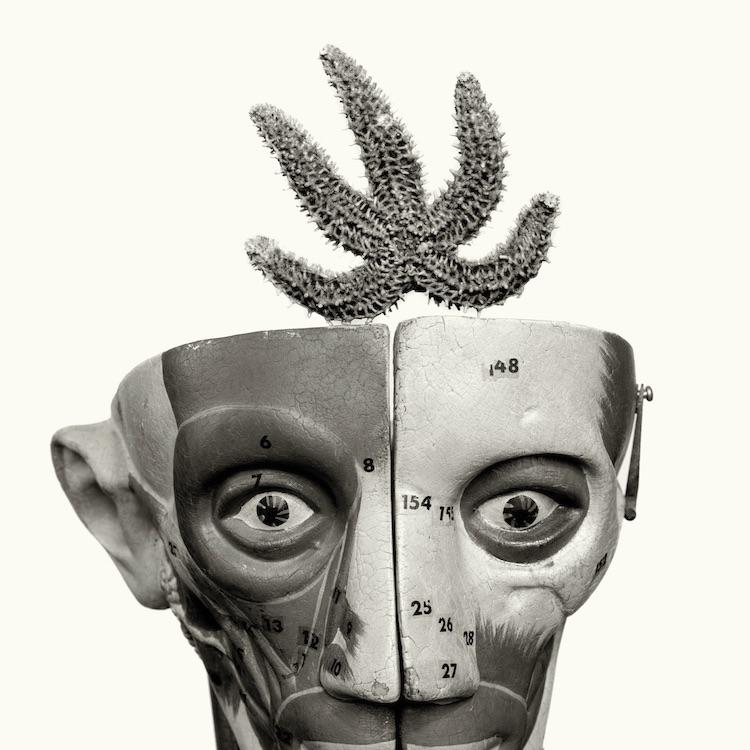 HEADS-12.jpg