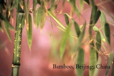 Bamboo gravado, Beijing, China