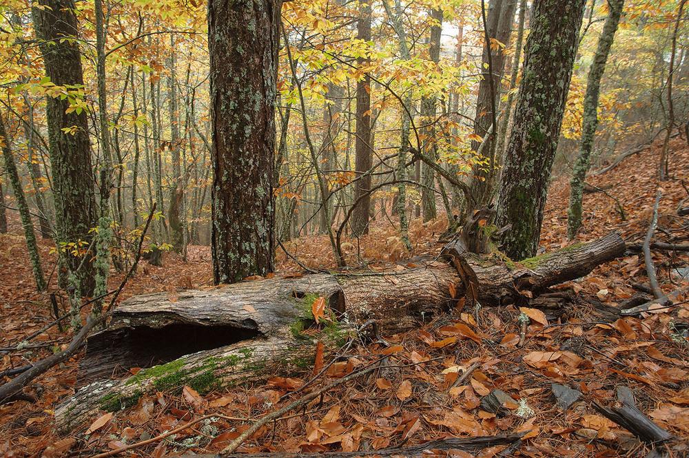 Descobri este belo bosque num dia de chuva, pouco antes da data do passeio. Para garantir o mesmo tipo de oportunidades, comecei precisamente por esta zona, naquilo que se veio a confirmar como o nosso único dia com luz difusa e alguma chuva.