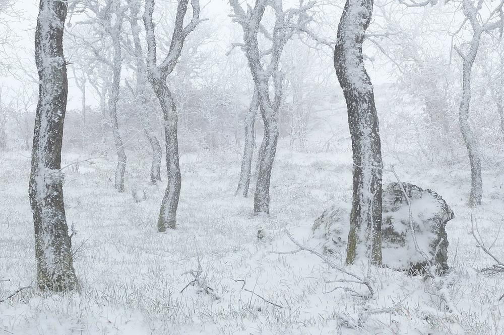 O silêncio... o bosque... a neve. O tempo parou.