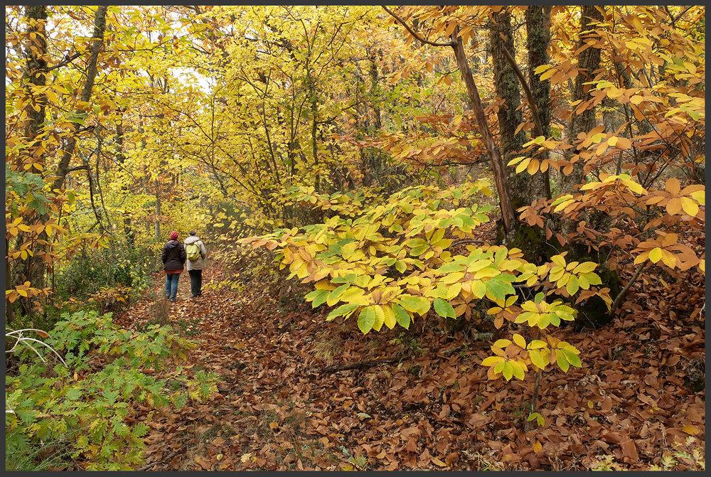 Carvalho-negral à esquerda, castanheiro-bravo à direita... com a mistura a perpetuar-se por todo o bosque.