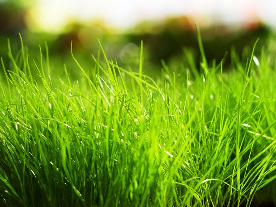 7. Lawn Care