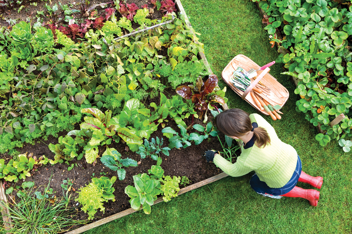 Kitchen Gardener Magazine Vegetable Garden Planning Bobs Market And Greenhouses