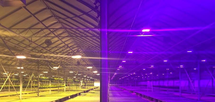 High Pressure Sodium next to LEDs at Bob's.