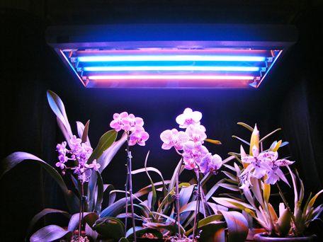 T5-fluorescent-grow-lights-Simple.jpg