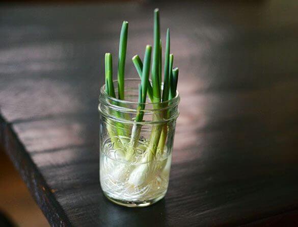 grow-onions-in-mason-jar-585x445.jpg