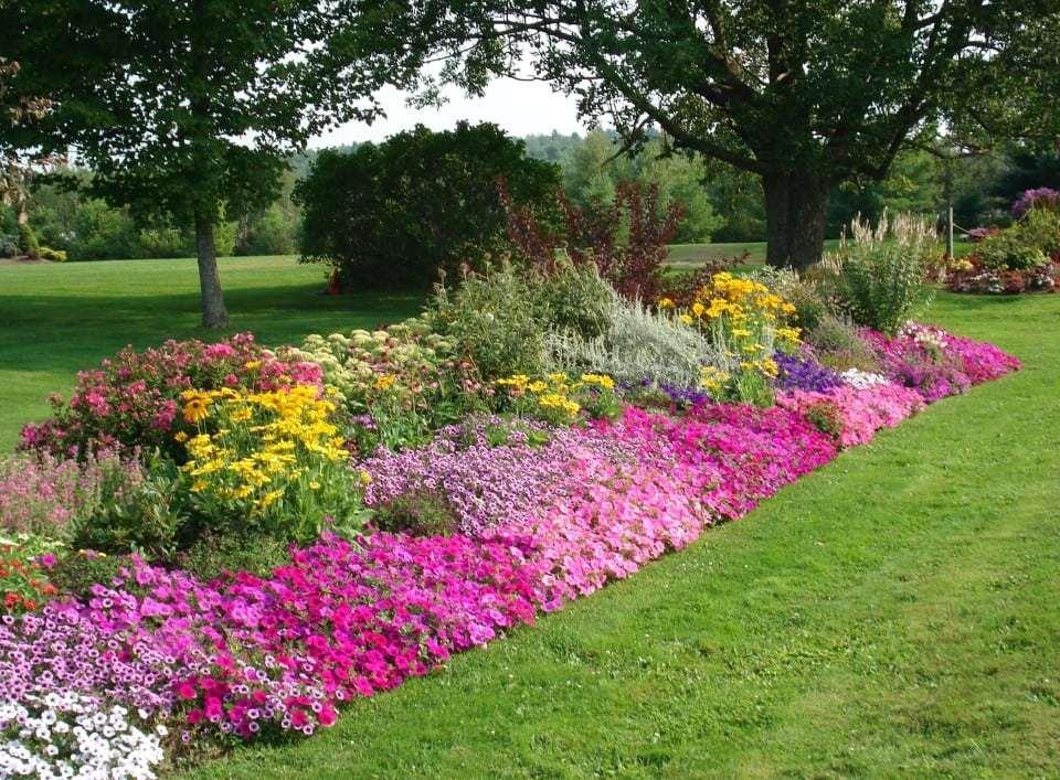 A Mixed Bed of Annuals & Perennials