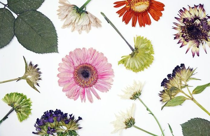 hero-how-to-press-flowers-720x475.jpg