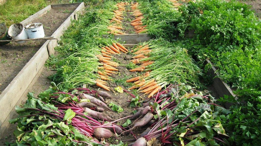 harvest-897733_1920.jpg