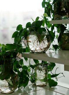 5b6f362655cb538d71dc12ffc19605a5--plants-indoor-indoor-gardening.jpg