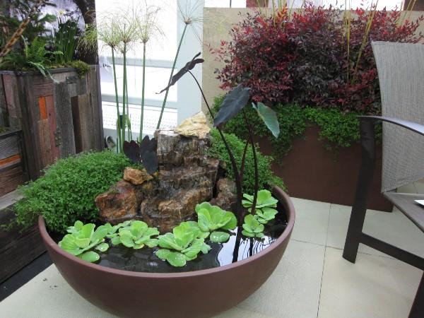 indoor-container-water-garden-indoor-water-plants-9d28f3e0fa1f3016.jpg