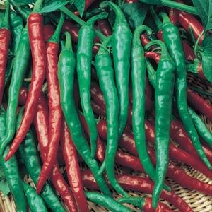 Pepper Cayenne Long Thin (HOT)