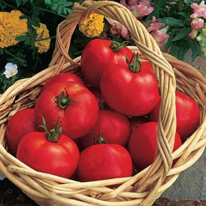 Tomato Early Girl