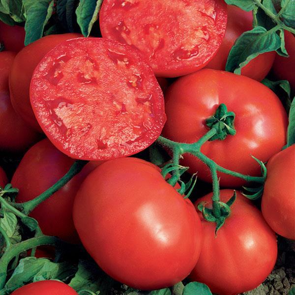 Tomato Beefsteak (Non-Hybrid)