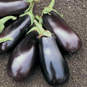 Eggplant (Classic)