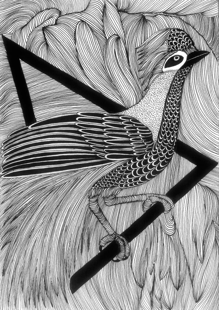 BIRD_01.jpg