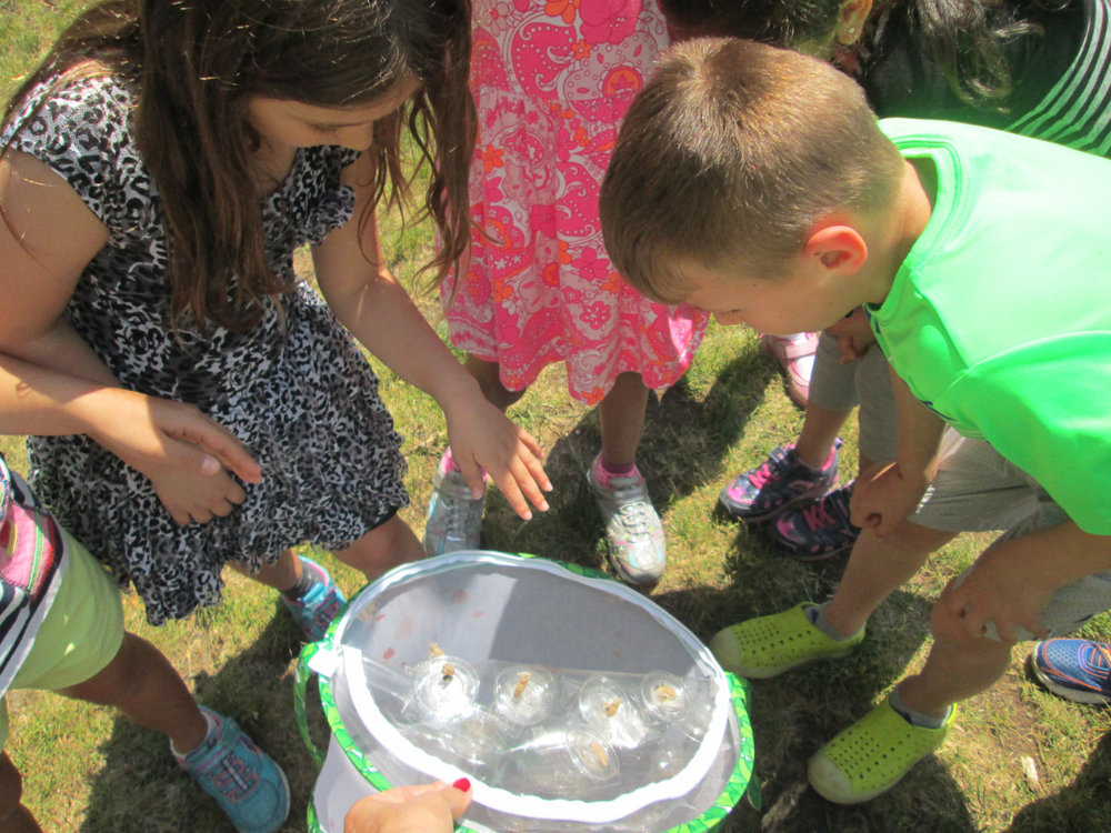 After the Memorial Day holiday, the Lower Elementary East students returned to school with some new classmates.  Over the long weekend, the Monarch Butterflies emerged from their cocoons. Before recess, with lots of love and some sadness, the children released their new friends into nature.