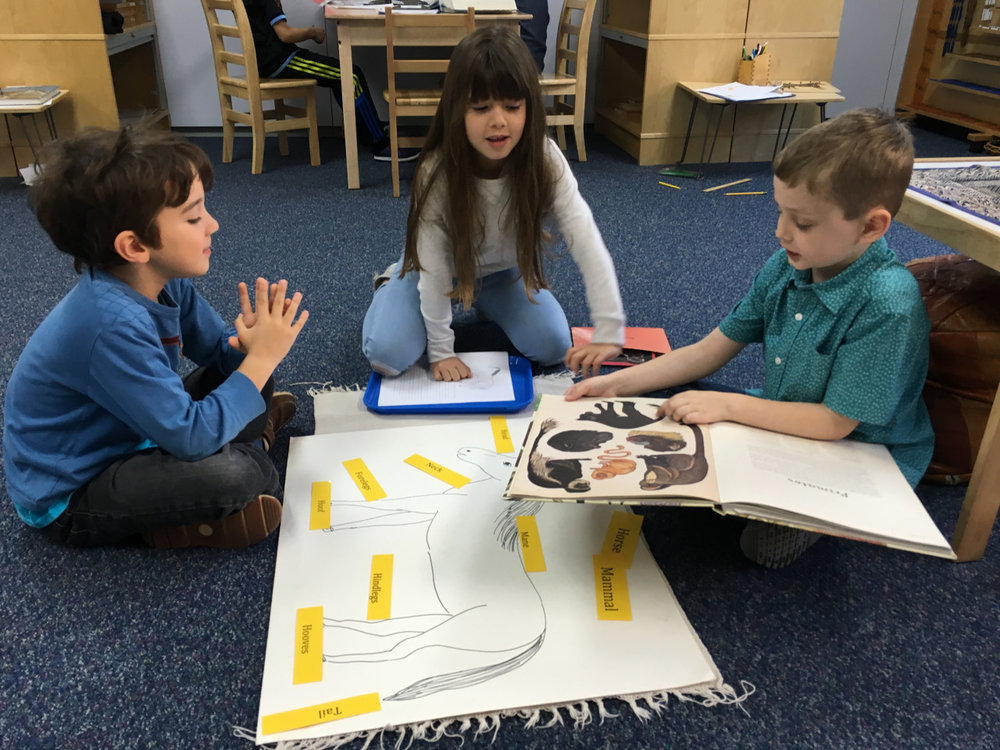 Sometimes an opportunity arises for a child to give a classmate a lesson about a subject he or she might have missed.  One first grade Lower Elementary West student gave another first grade student a Zoology lesson about the parts of a mammal, (with teacher supervision of course!).