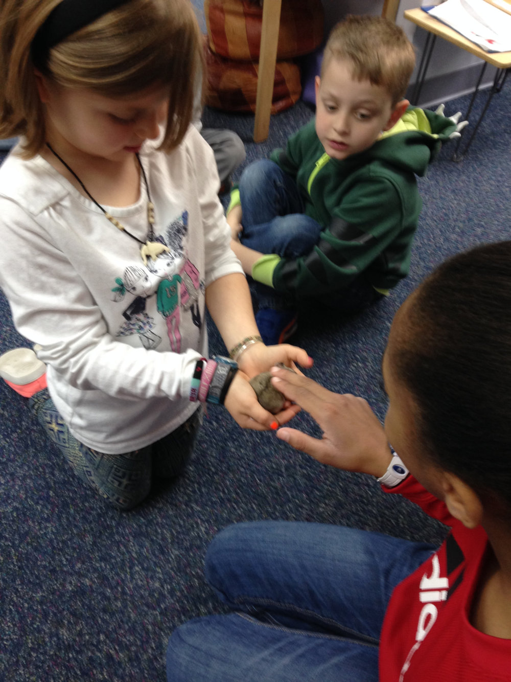 Thanks to a second grade Lower Elementary West student who brought in her pet hamster for her classmates to observe during their Zoology lessons about mammals.