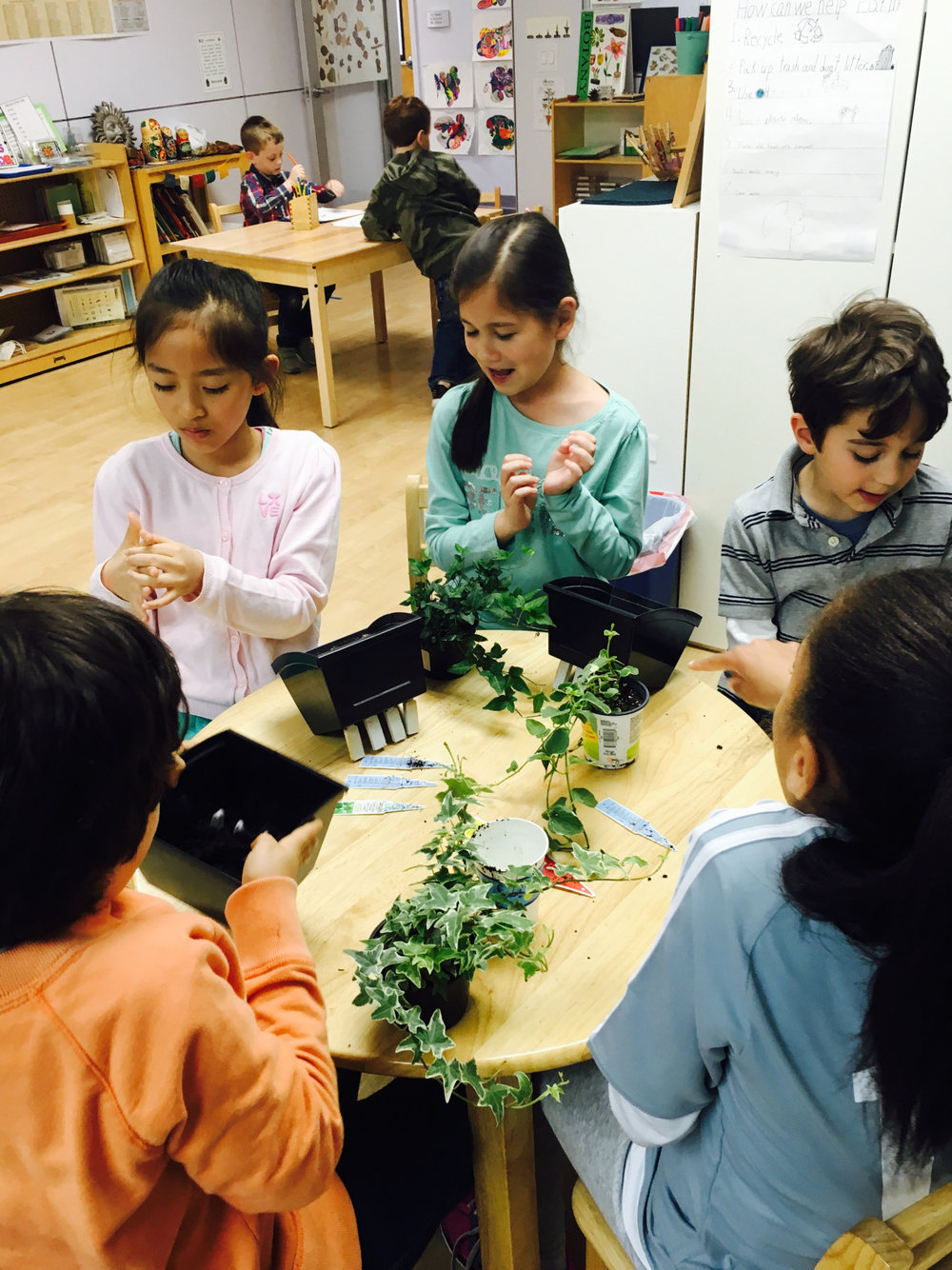 "Spring is a time for planting, and the Lower Elementary West students planted radish seeds and started their ""green wall"" in the classroom."