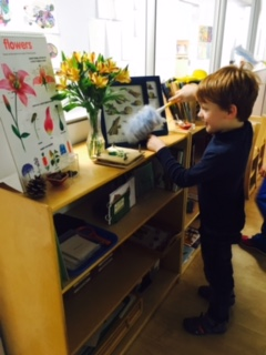 For the Lower Elementary West students, an important part of being in a Montessori classroom is helping to keep their environment clean.  One child helped by dusting the Botany shelf.  All students in the class have classroom jobs that rotate weekly.