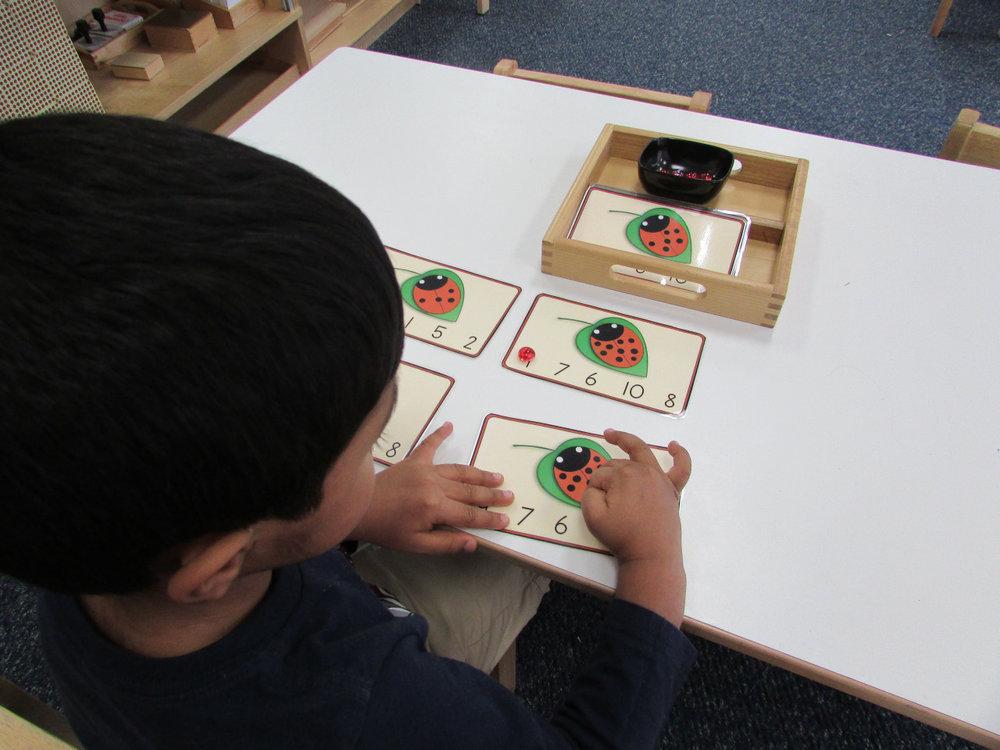 In the Montessori classroom, there are many ways to learn the same Math concepts.  A variety of works help to keep the Primary 3 students interested in practicing skills such as associating numbers and quantities. In one example, a student counts the number of dots on a ladybug and places a bead on the appropriate number.